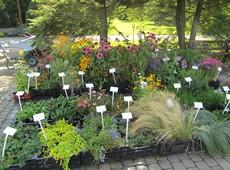 купить деревья и кустарники