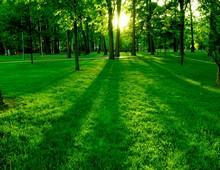 газон рулонный