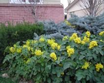 декоративные растения оптом