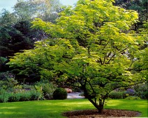 деревья оптом