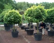 купить растения для озеленения