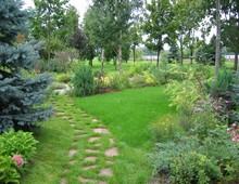 купить кустарники для живой изгороди