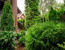 быстрорастущая живая изгородь