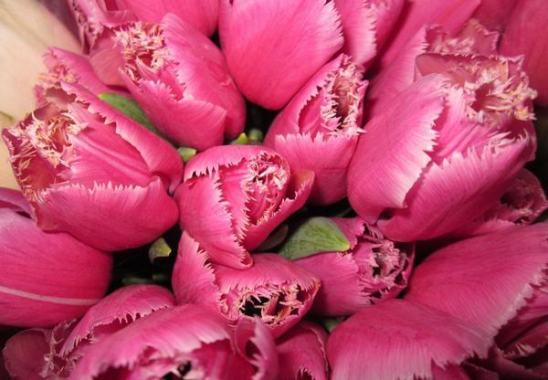 купить срезку цветов